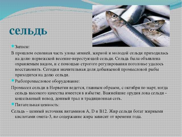 сельдь Запасы: В прошлом основная часть улова зимней, жирной и молодой сельди...