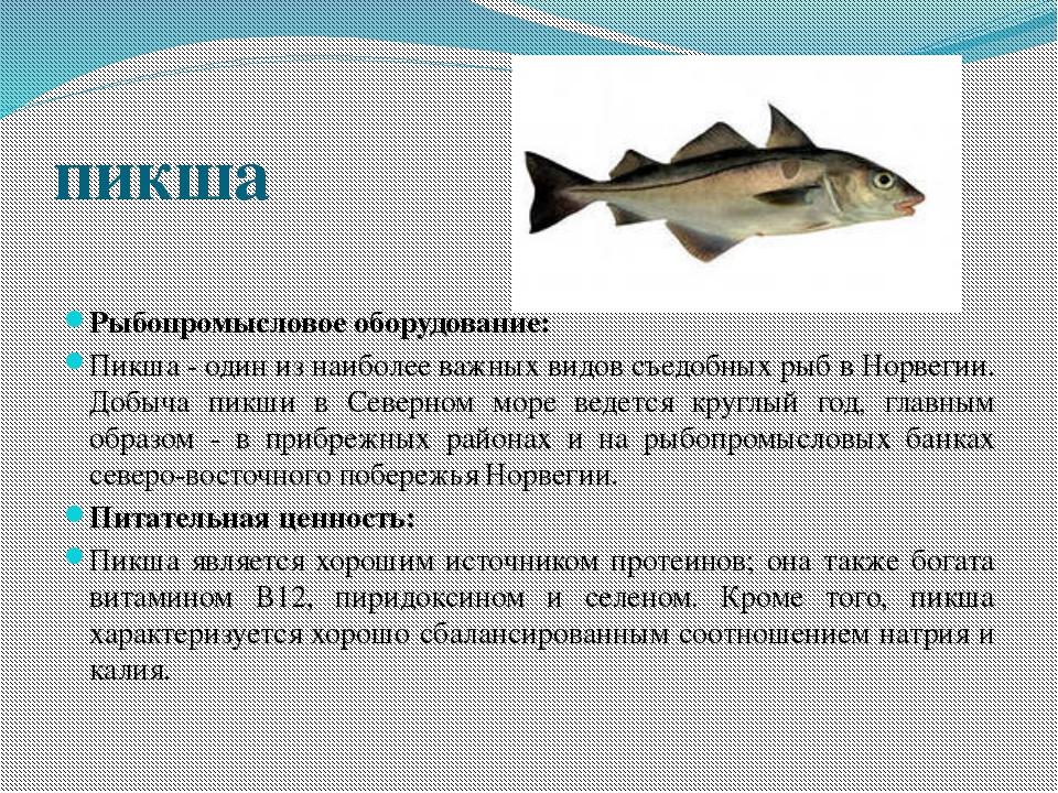 пикша Рыбопромысловое оборудование: Пикша - один из наиболее важных видов съе...