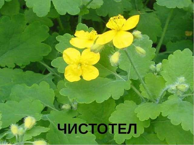 ЧИСТОТЕЛ