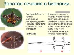 Золотое сечение в биологии. У многих бабочек и стрекоз соотношение размеров г