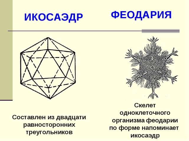 Составлен из двадцати равносторонних треугольников ИКОСАЭДР ФЕОДАРИЯ Скелет о...