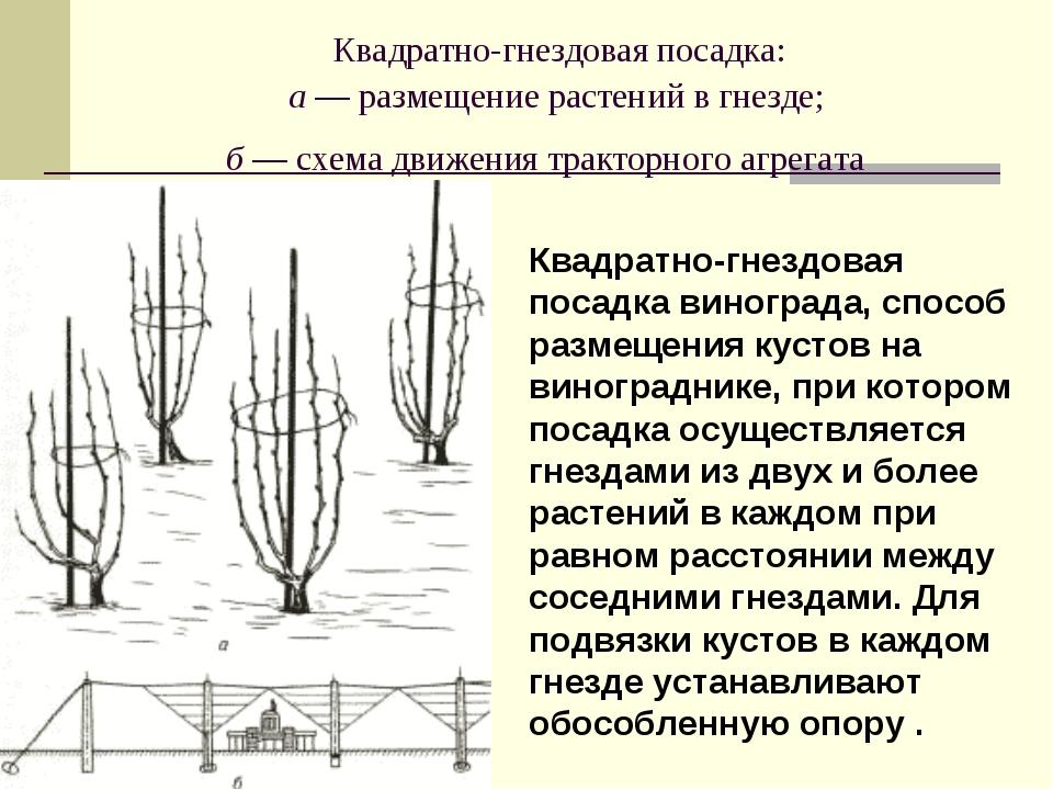 Квадратно-гнездовая посадка: а — размещение растений в гнезде; б — схема дви...