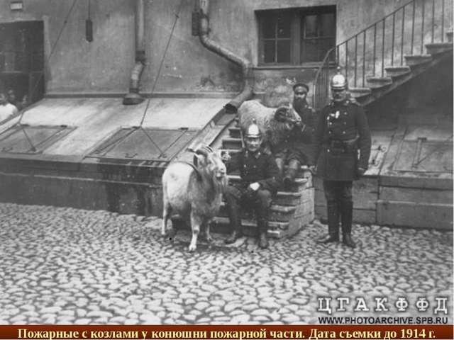 Пожарные с козлами у конюшни пожарной части. Дата съемки до 1914 г.