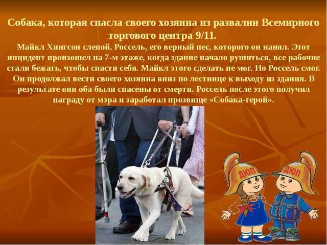 Собака, которая спасла своего хозяина из развалин Всемирного торгового центр...