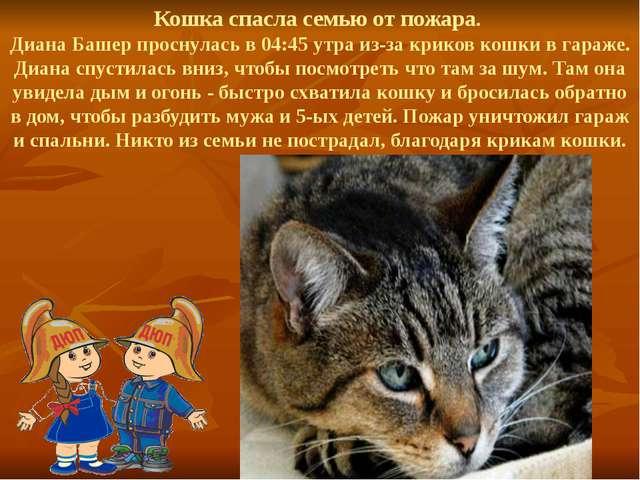 Кошка спасла семью от пожара. Диана Башер проснулась в 04:45 утра из-за крико...
