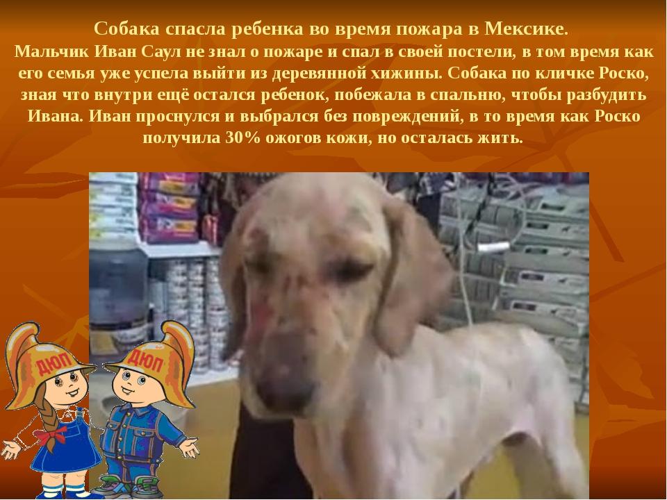 Собака спасла ребенка во время пожара в Мексике. Мальчик Иван Саул не знал о...