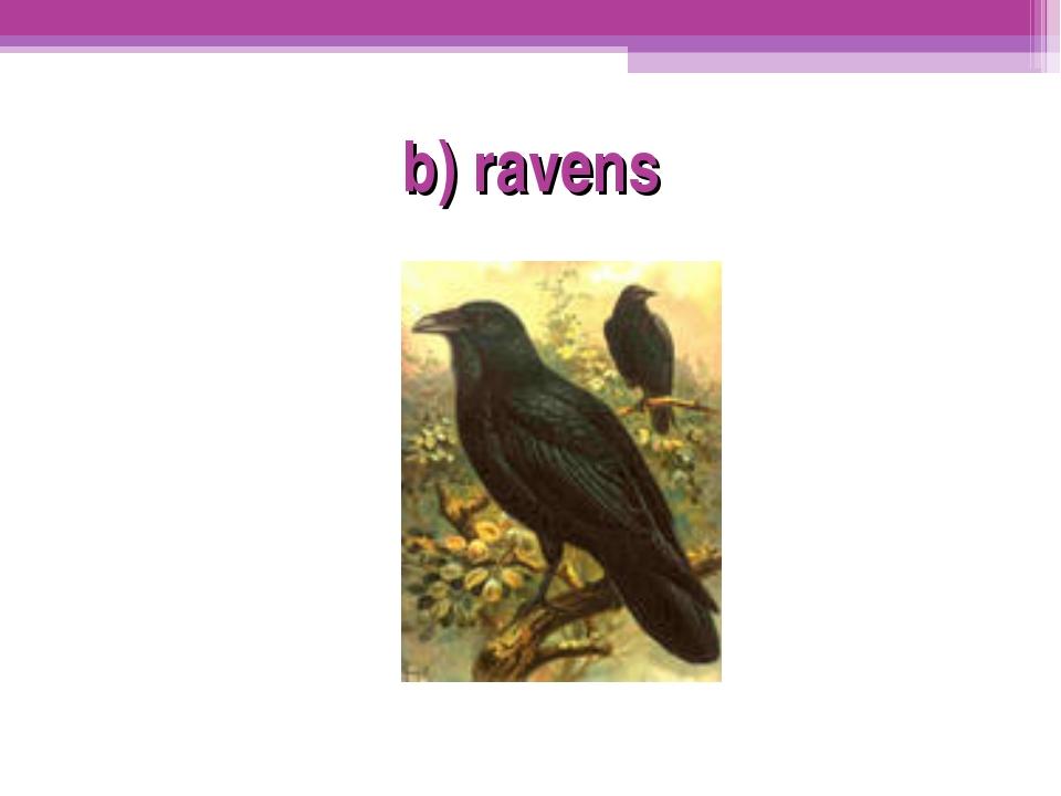 b) ravens