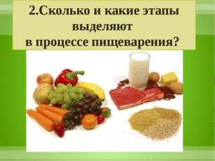 2.Сколько и какие этапы выделяют в процессе пищеварения?