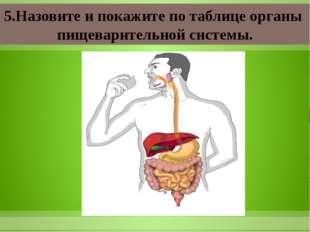 5.Назовите и покажите по таблице органы пищеварительной системы.