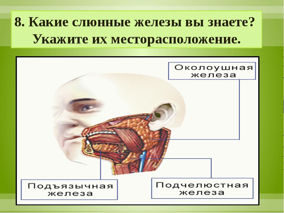 8. Какие слюнные железы вы знаете? Укажите их месторасположение.
