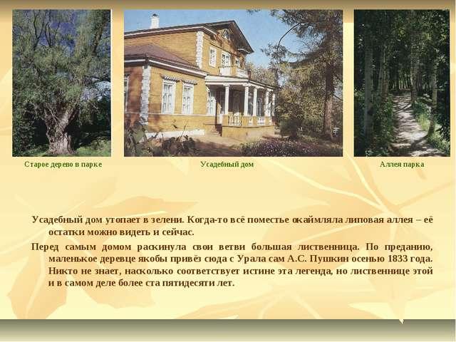 Усадебный дом утопает в зелени. Когда-то всё поместье окаймляла липовая аллея...