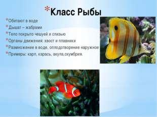 Класс Рыбы Обитают в воде Дышат – жабрами Тело покрыто чешуей и слизью Органы