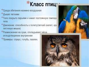 Класс птицы Среда обитания наземно-воздушная Дышат легкими Тело покрыто перья