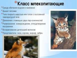 Класс млекопитающие Среда обитания водная и наземная Дышат легкими Тело покры