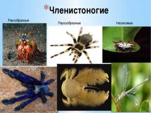 Членистоногие Ракообразные Паукообразные Насекомые
