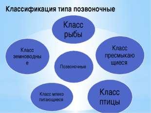 Классификация типа позвоночные