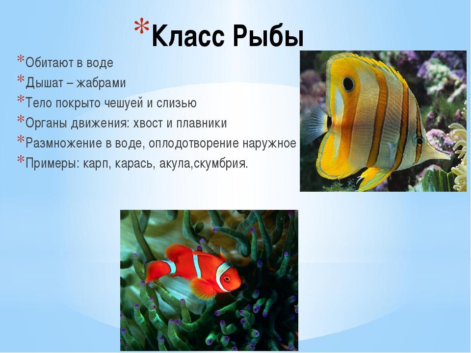 Класс Рыбы Обитают в воде Дышат – жабрами Тело покрыто чешуей и слизью Органы...