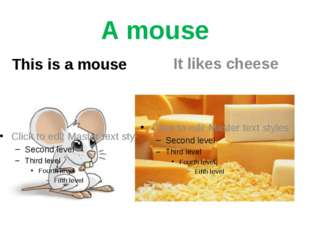 A mouse This is a mouse It likes cheese