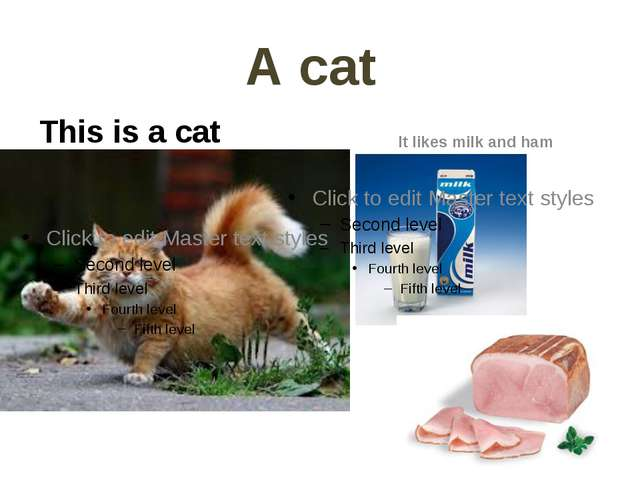 А саt This is a cat It likes milk and ham