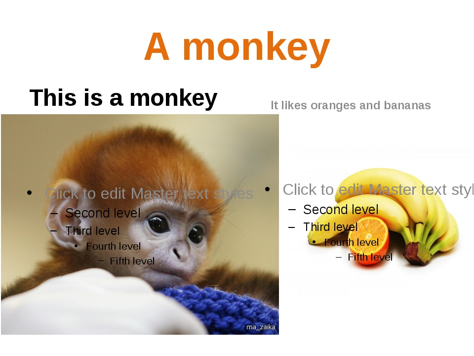 A monkey This is a monkey It likes oranges and bananas