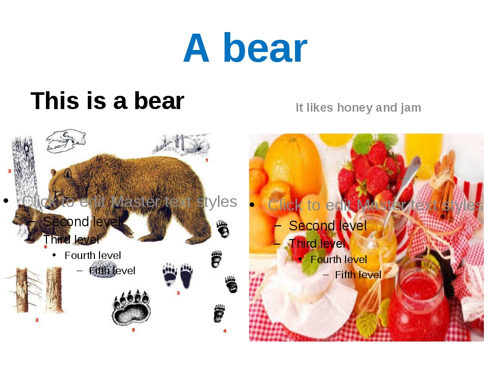 A bear This is a bear It likes honey and jam