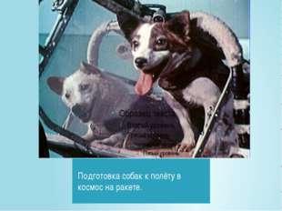 Подготовка собак к полёту в космос на ракете.