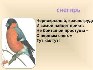 Чернокрылый, красногрудый, И зимой найдет приют: Не боится он простуды – С