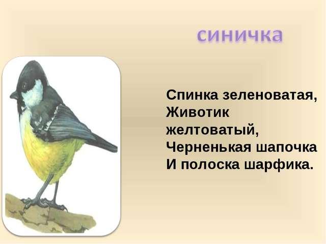 Спинка зеленоватая, Животик желтоватый, Черненькая шапочка И полоска шарфика.