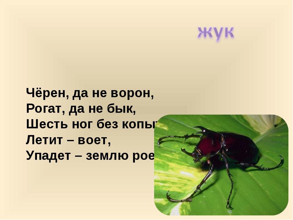 Чёрен, да не ворон, Рогат, да не бык, Шесть ног без копыт; Летит – воет, Упа...