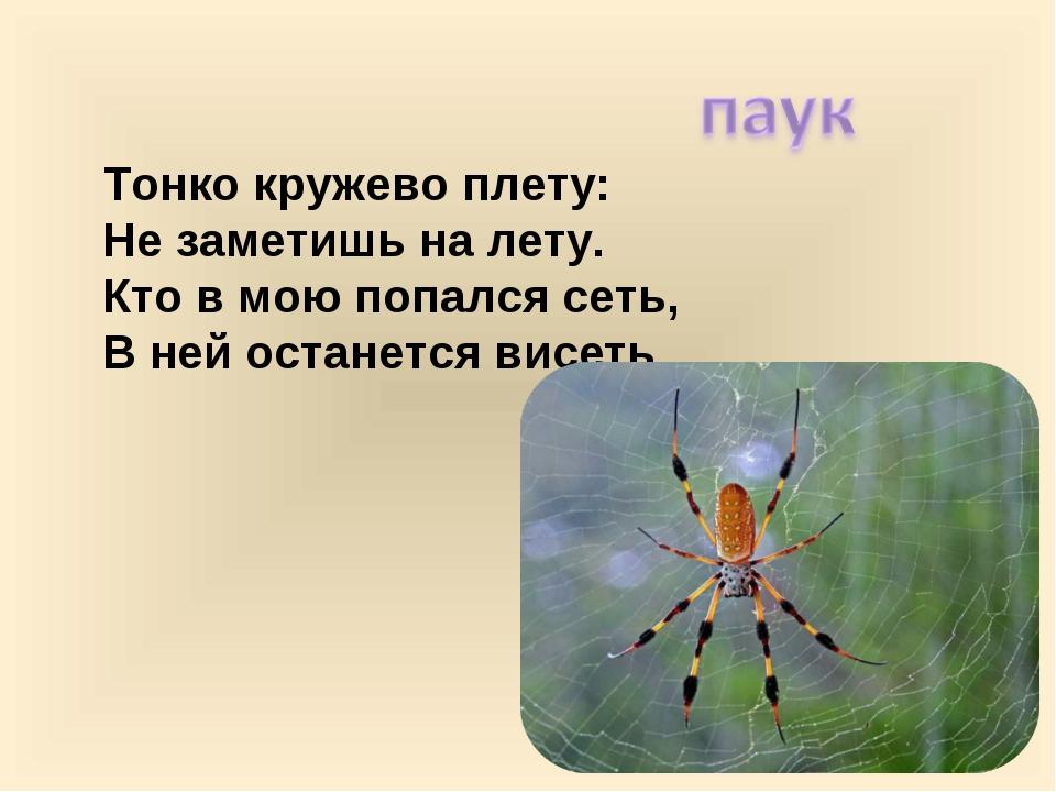 Тонко кружево плету: Не заметишь на лету. Кто в мою попался сеть, В ней оста...