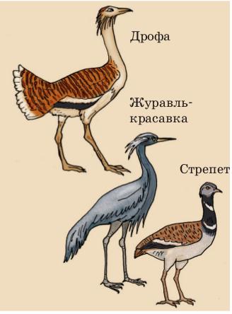 Птицы открытых пространств