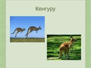 Жираф Самое высокое животное на свете – жираф. Высота тела до 5,5 м, масса до