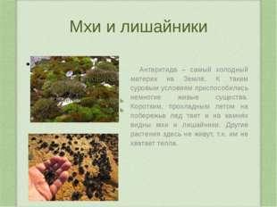 Обитатели Южной Америки броненосцы Водосвинка (капибара)