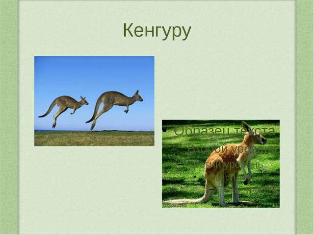 Жираф Самое высокое животное на свете – жираф. Высота тела до 5,5 м, масса до...