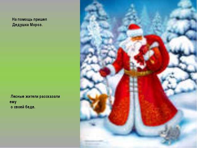 На помощь пришел Дедушка Мороз. Лесные жители рассказали ему о своей беде.