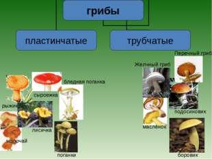 маслёнок боровик подосиновик Желчный гриб Перечный гриб рыжик лисичка сыроежк