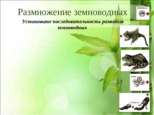 * Установите последовательность развития земноводных Размножение земноводных