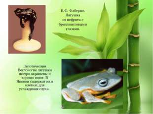 Экзотические Веслоногие лягушки пёстро окрашены и хорошо поют. В Японии содер
