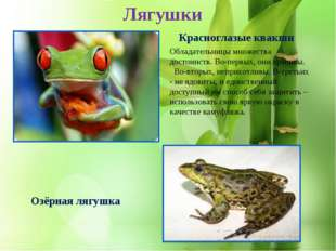 * Озёрная лягушка Красноглазые квакши Лягушки Обладательницы множества достои