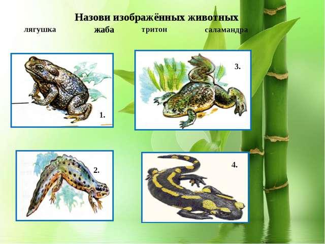 1. тритон лягушка саламандра 2. 3. 1. 4. Назови изображённых животных жаба