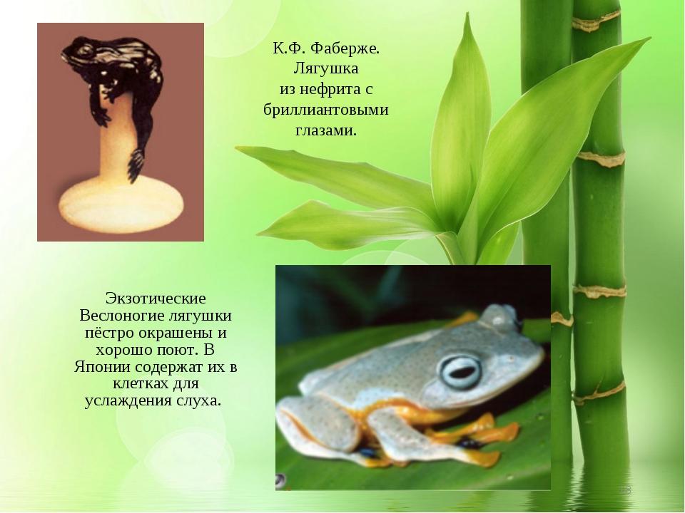 Экзотические Веслоногие лягушки пёстро окрашены и хорошо поют. В Японии содер...