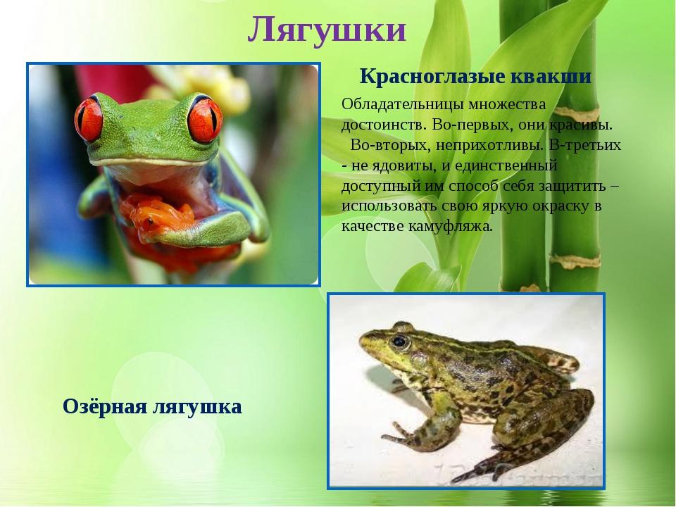 * Озёрная лягушка Красноглазые квакши Лягушки Обладательницы множества достои...