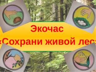 Экочас «Сохрани живой лес»