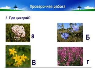 Проверочная работа 7. Какое растение хорошо растёт в воде и на земле? А Кувши