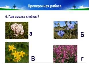 9. Что «бьёт» растение зверобой? 10. Какие ты знаешь лекарственные растения,