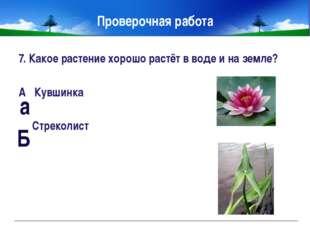 Правила друзей луга. Не рвите на лугу цветы. Не ловите бабочек. Не разоряйте