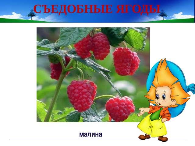 СЪЕДОБНЫЕ ЯГОДЫ черника Непорада Наталия Евгеньевна