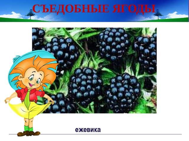 СЪЕДОБНЫЕ ЯГОДЫ земляника Непорада Наталия Евгеньевна