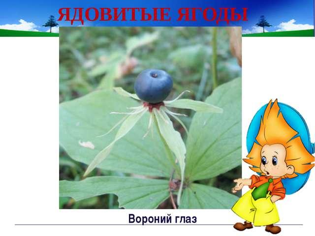 ЯДОВИТЫЕ ЯГОДЫ ландыш Непорада Наталия Евгеньевна