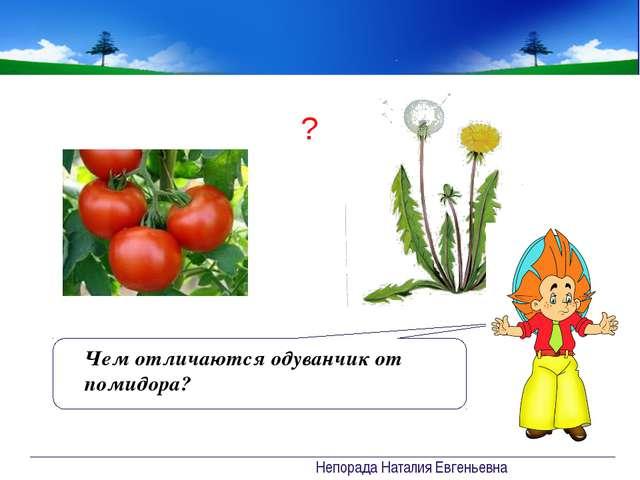 Проверочная работа 1. Где фото луга а Б В Непорада Наталия Евгеньевна